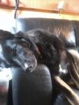 ebony sleep.jpg